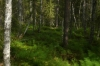 Soft grasses, Vikaköongäs and Vaattunkiköongäs wilderness area, Arctic Circle Hike FI