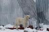 Cold dog at Otmek Pass, 3,330m