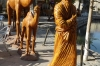 The Silk Road camels in Lyabi-Hauz Plaza