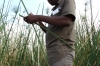 Our guide Hidden show how papyrus is used by African men and women, Kwando River, Namibia/Botswana