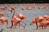Flamingos on Ria Celestun