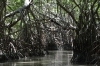 Mangrove swamp on Ria Celestun