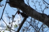 Woodpecker. Chichen Itza