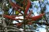 Red flowers at El Nicho