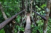 Forest path at El Nicho