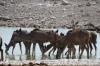 Kudu at the Olifantsbad waterhole, Etosha, Namibia