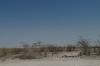 Ondongab waterhole, Etosha, Namibia