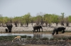 Elephants, Springbok, White Rhino at the Rietfontein waterhole, Etosha, Namibia