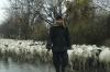 Shep & goats n the road, near Kvareli