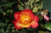 Fin Garden - UNESCO heritage Persian Garden