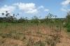 Casava (root), Kidichi Spice Farm, Tanzania