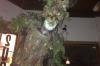 Tree man at Venice Brew House LA