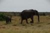 Elephant & cub, Masaimura National Reserve, Kenya