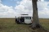 Day 3 lunch stop. We had trouble fnding an empty tree, Masaimara, Kenya