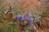 Spider weed. Monument Valley, AZ