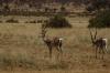 Samburu National Park, Kenya