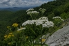 East Fork Overlook on the Blue Ridge Parkway NC