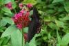Mariposario (butterfly reserve) at Reserva Natural Atitlan