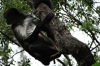 Spider monkey at Reserva Natural Atitlan