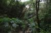 Swing bridge at Reserva Natural Atitlan