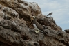 Birdlife on Islas Marietas near Punta de Mita