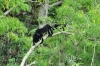 Howler monkeys. We could hear them all day