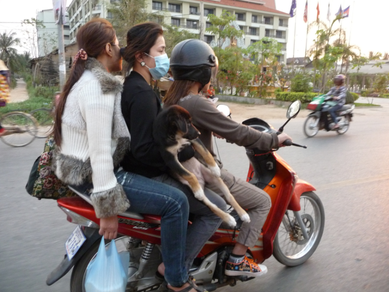 Road to Siem Reap during rush hour