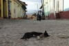 Dog's life in Trinidad city, Cuba
