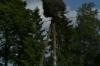 Storks near Vihula Manor, EE